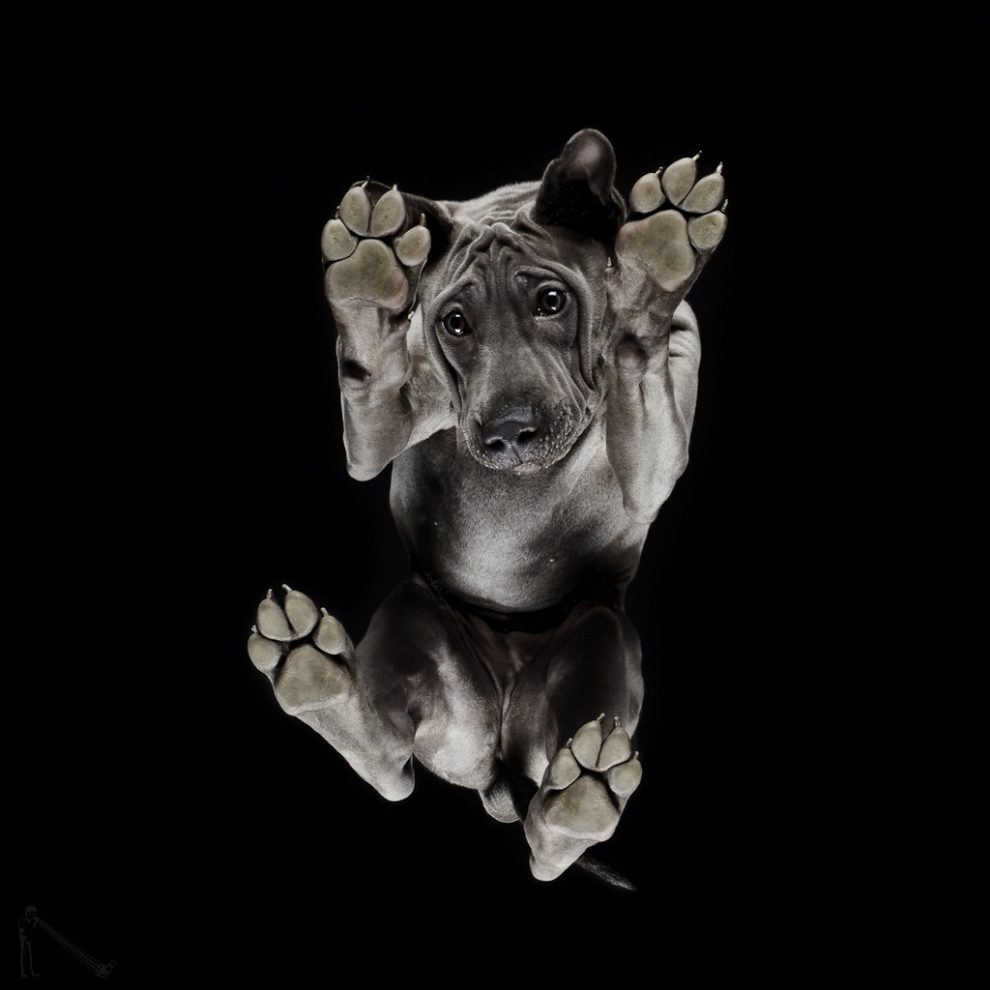 Андрюс Бурба в проекте Under-dogs (Под собакой)