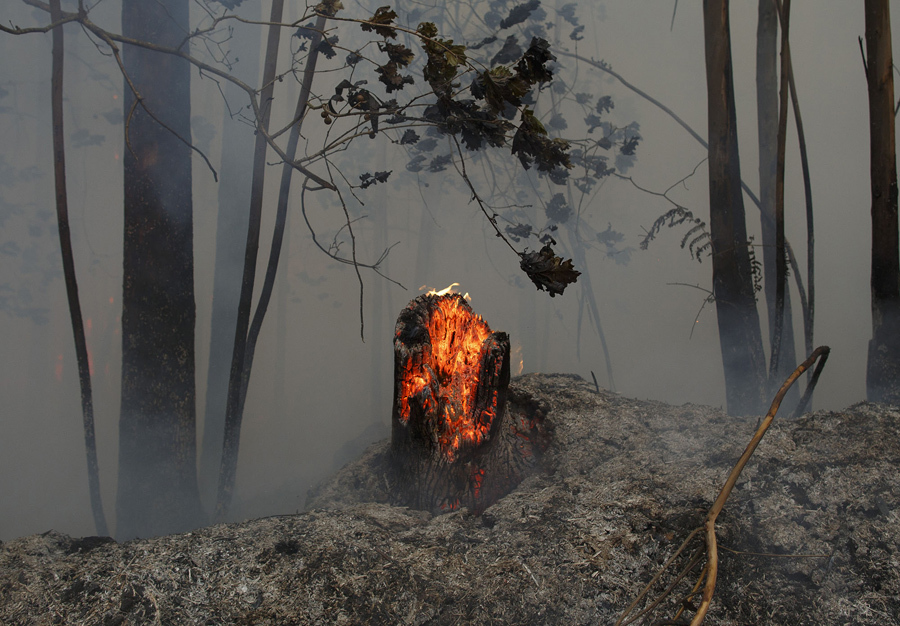 Деревья горят после того, как пожар унес десятки жизней, 19 июня 2017 года около Castanheira de Pera, в районе Leiria, Португалия.
