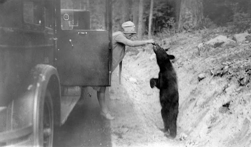 Лесная дорога, штат Вашингтон, 1927.