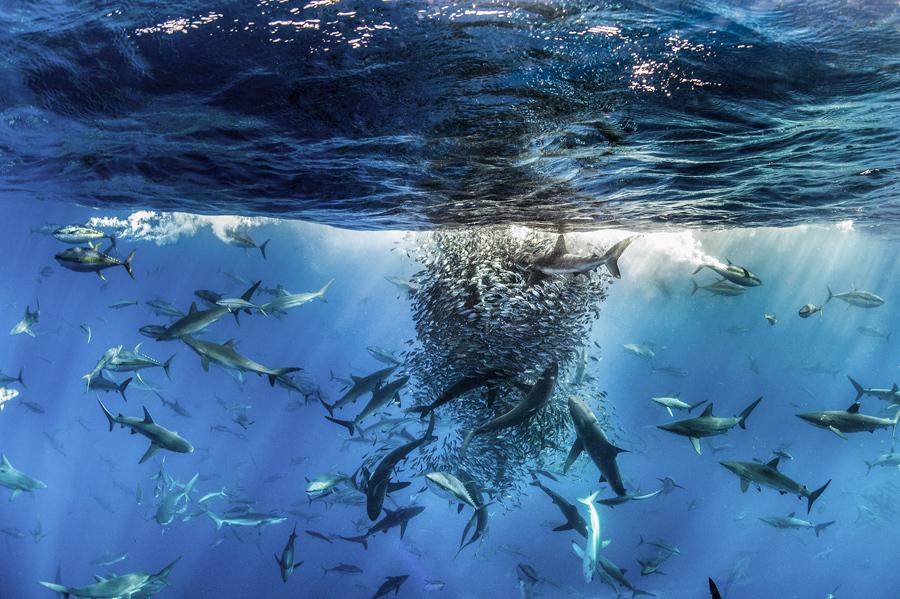 Победители конкурса BigPicture Natural World Photography 2017