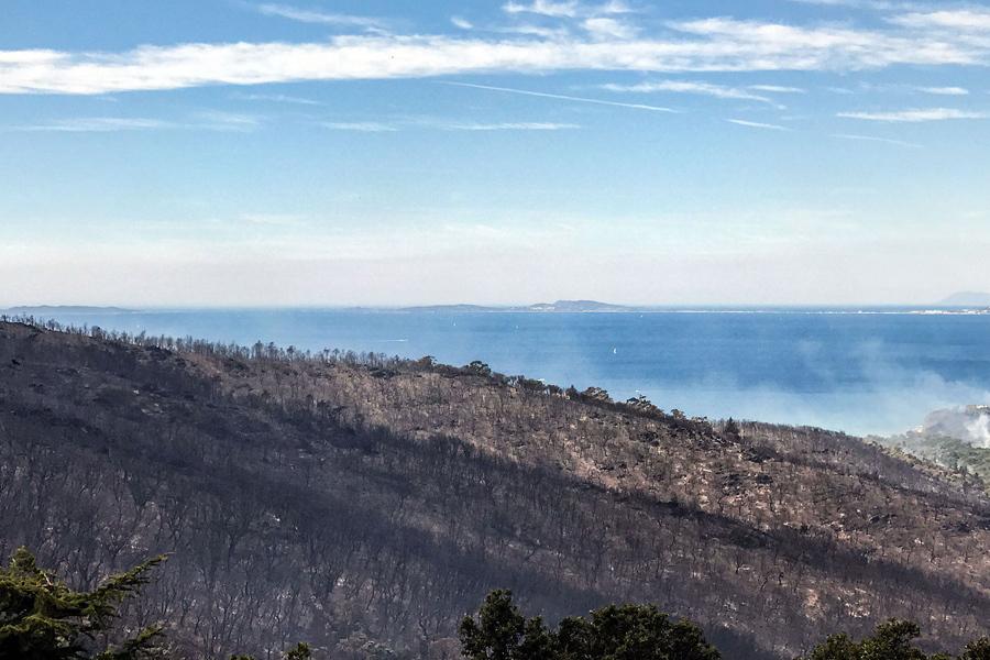 Выжженный лес после пожара в в Борм-ле-Мимоза.
