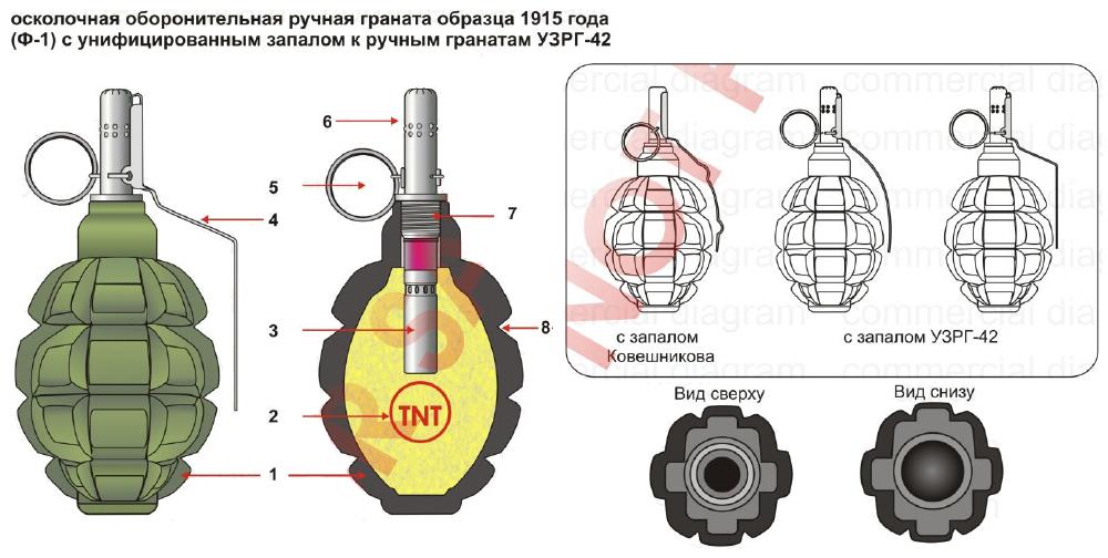 Почему гранату Ф-1 называют «лимонкой» ?
