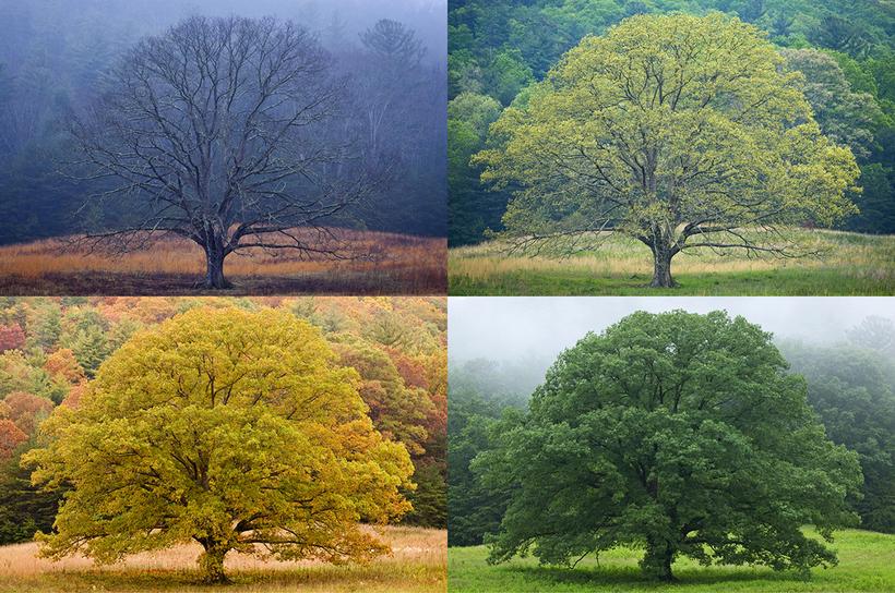 Как изменение климата влияет на смену сезонов