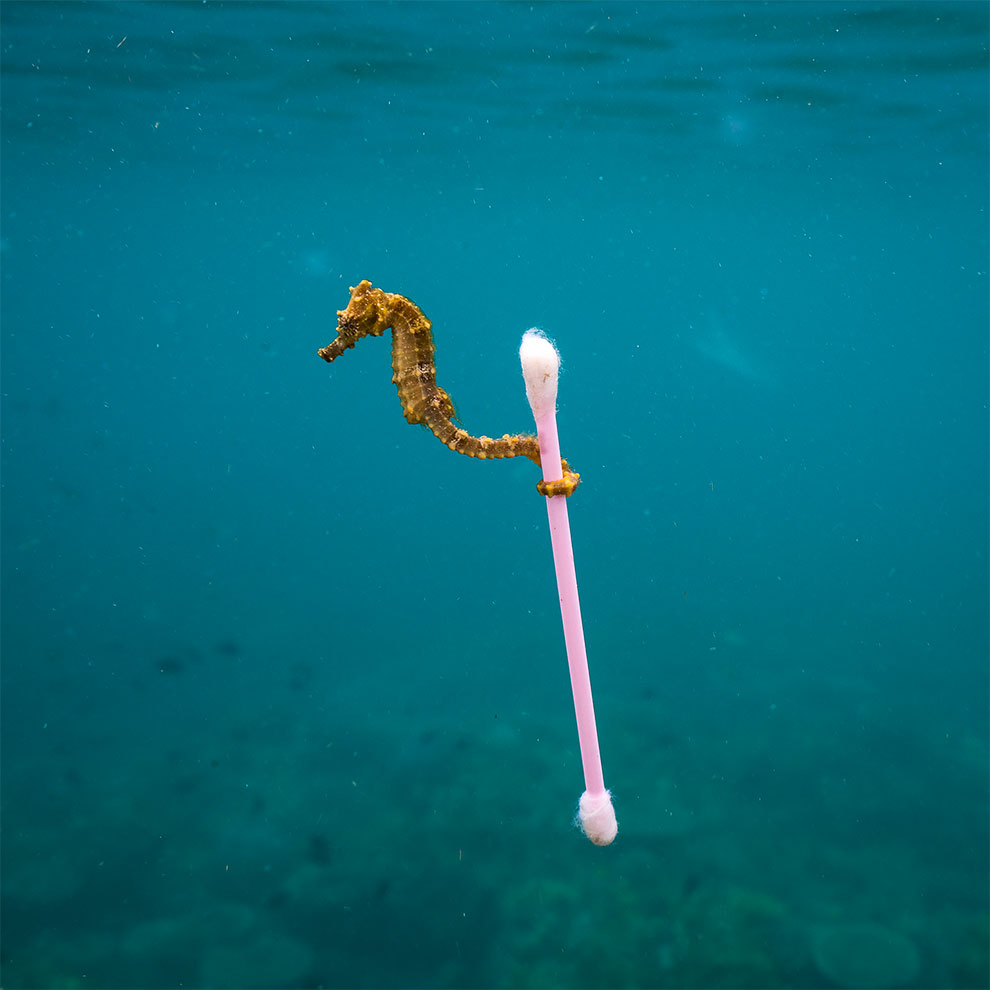 Wildlife фотограф года 2017: Финал