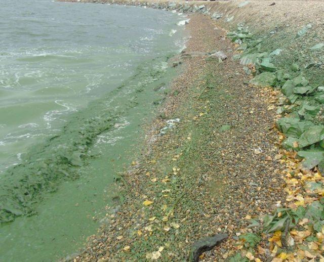 В Нижнем Тагиле позеленело местное водохранилище