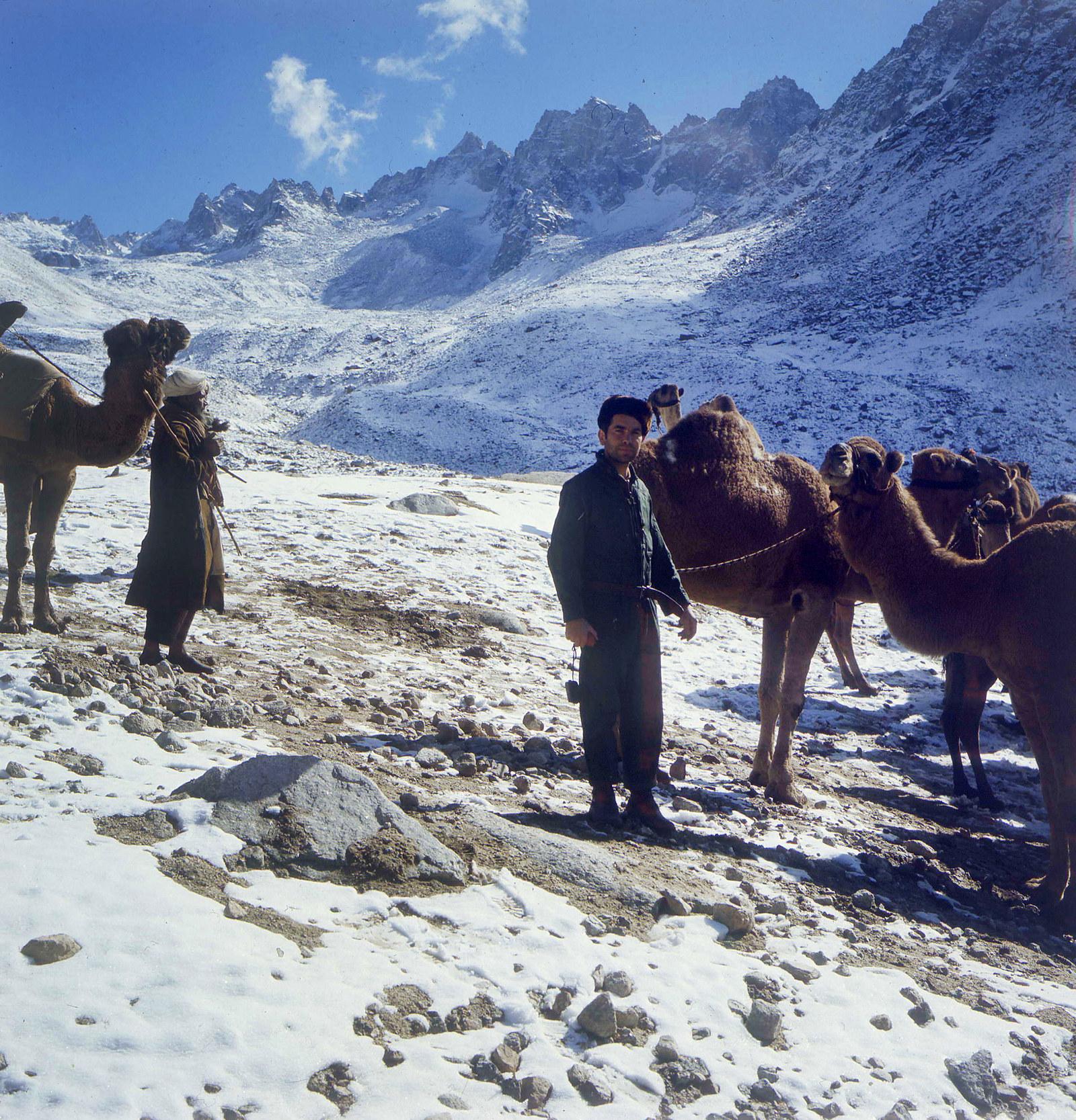 Караван мулов останавливается на привал в заснеженных горах Нуристана, 1970
