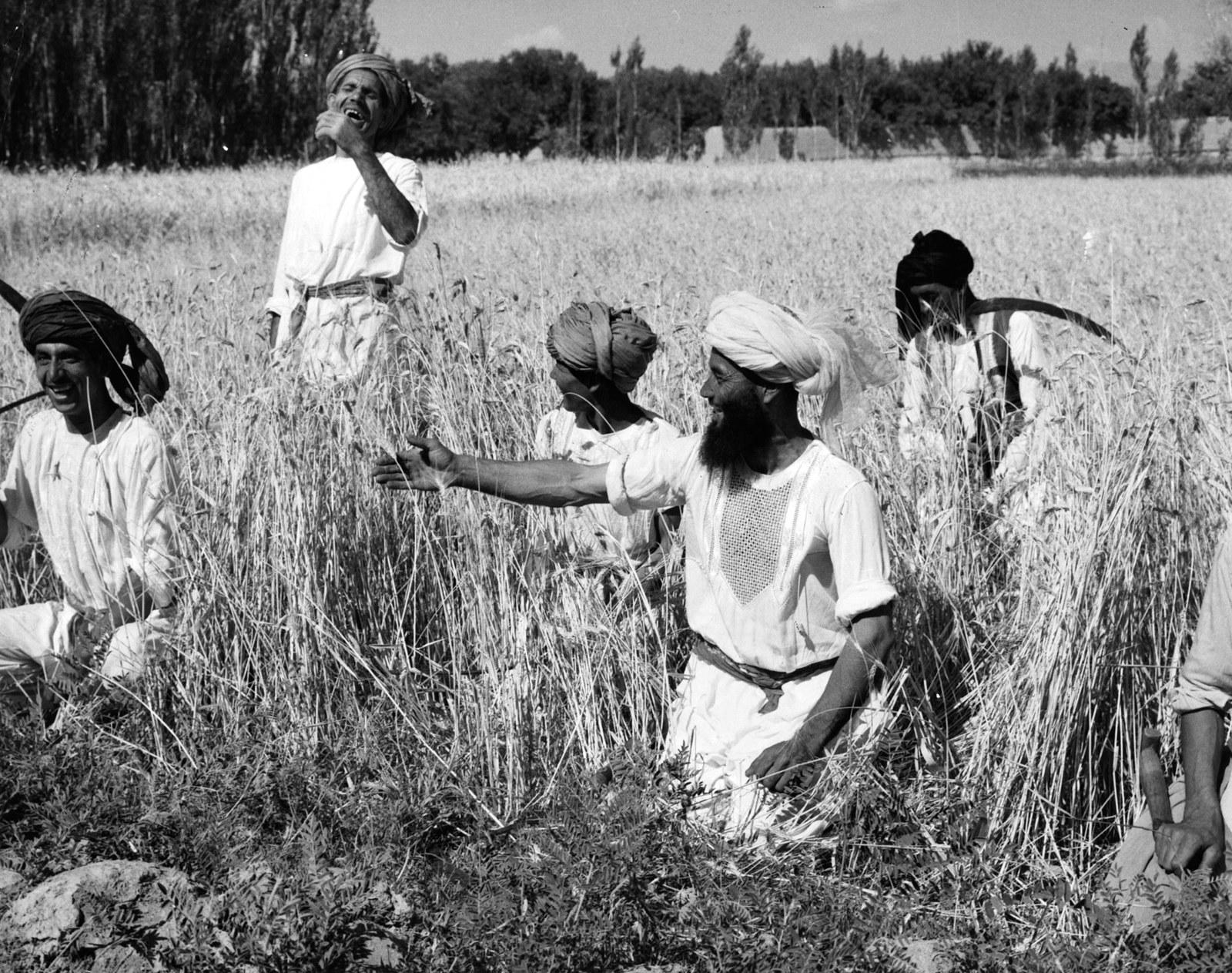 Афганские фермеры работают в поле, 1960г