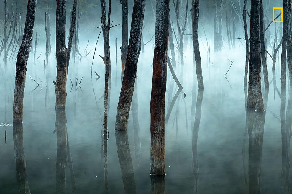 Утренний туман размывает мертвые деревья румынского озера Куйдель, естественного резервуара, созданного оползнями.
