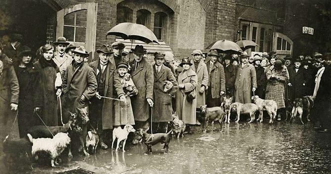 Люди в Берлине привели своих собак на усыпление, так как они не в состоянии платить увеличенный налог на домашних питомцев, 1926 год