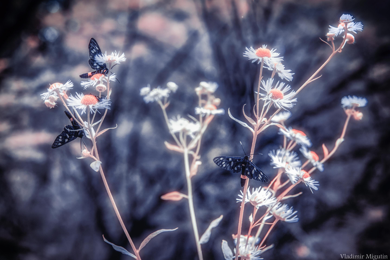 Бабочки и цветы в лесу, Чернобыльская зона отчуждения