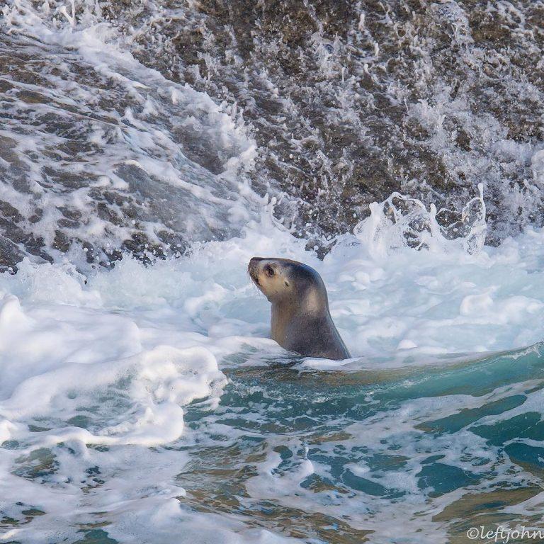 Удивительные портреты диких животных