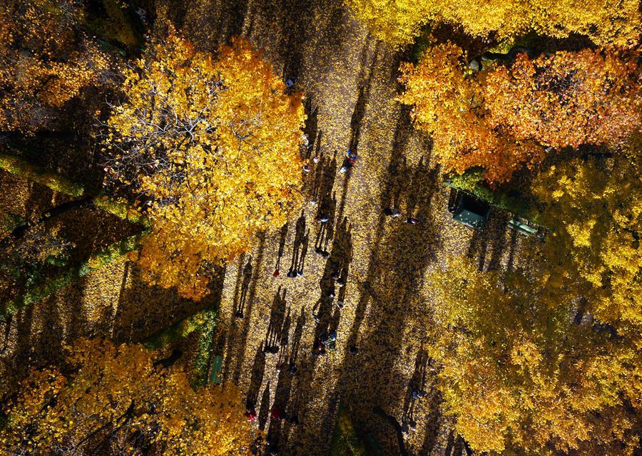 Листья в Летнем саду, старейшем парке Санкт-Петербурга.