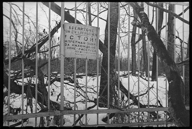 В освобожденном Пушкине. Плакат немецкого коменданта на решетке Екатерининского парка, грозящий расстрелом находящимся в этой зоне. Ленинградский фронт, 1944 год: