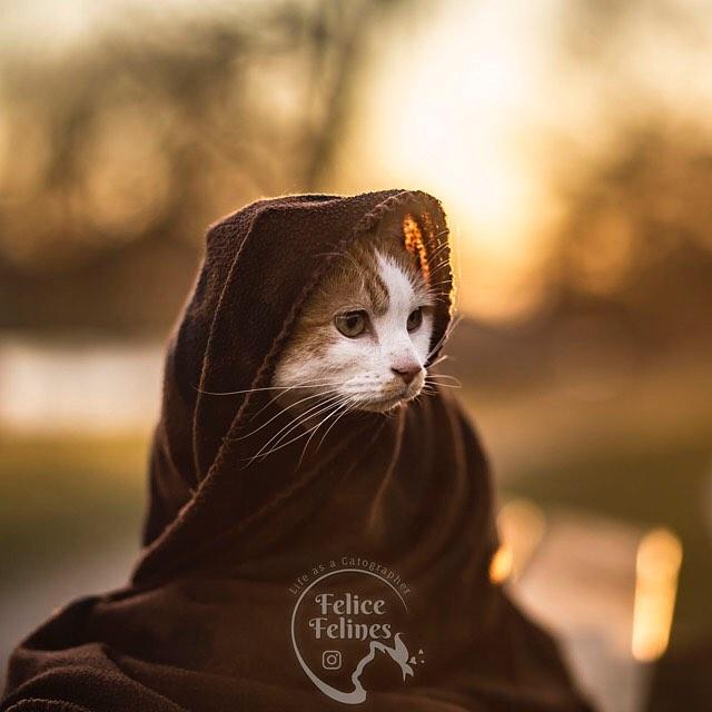 Красивые портреты кошек