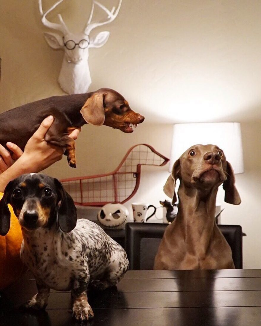 10 самых популярных собак Инстаграма