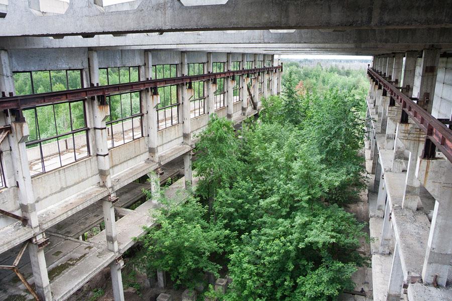 Заросшие руины промышленного комбината в Воронежской области