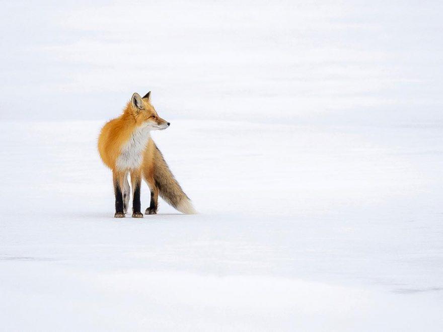 Захватывающие портреты диких животных Кевина Бискаборна